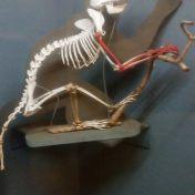 ancient monkey skeleton